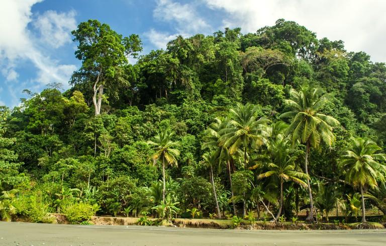 Rainforest Meets Ocean