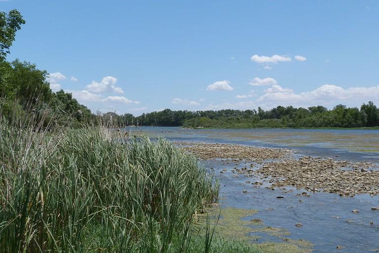 Reserva Natural de losGalachos de la Alfranca