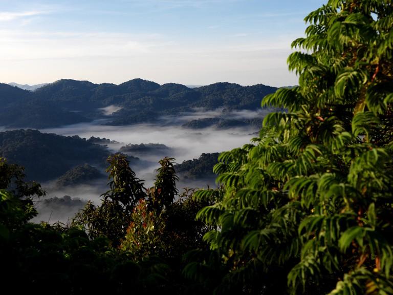 Rwanda's impressive Nyungwe National Park | Courtesy of Rwanda Development Board
