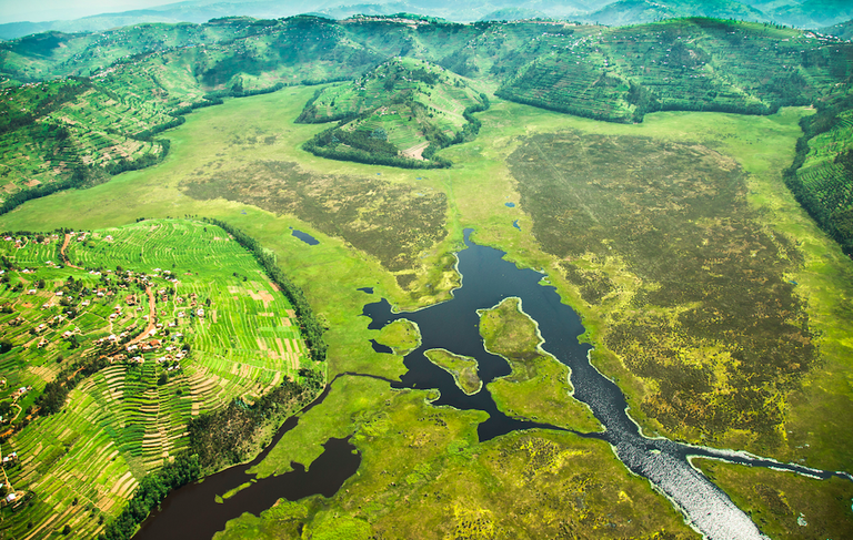 An aerial view of the Rugezi marsh | Courtesy of Cyril Ndegeya