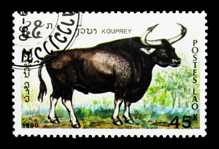 A kouprey appears on a stamp