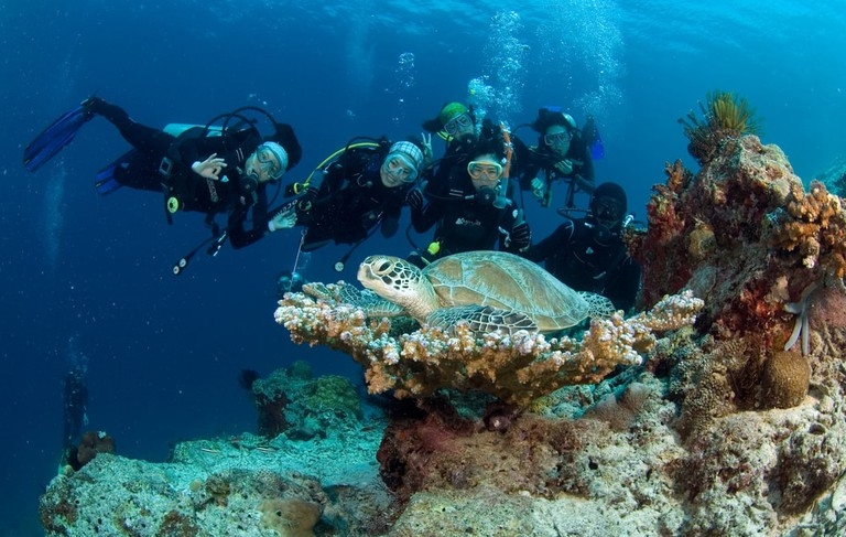 Sipadan ranks one of the best diving spots in the world