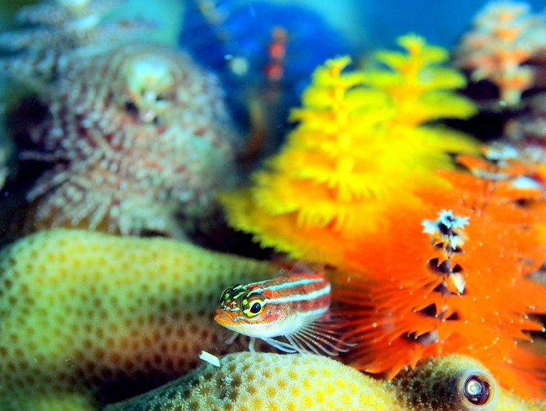 The colourful world beneath the sea at Thailand's Koh Tao