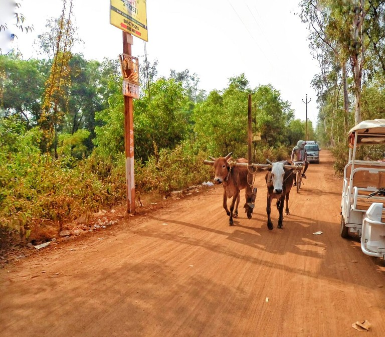 Rural road near Shantiniketan