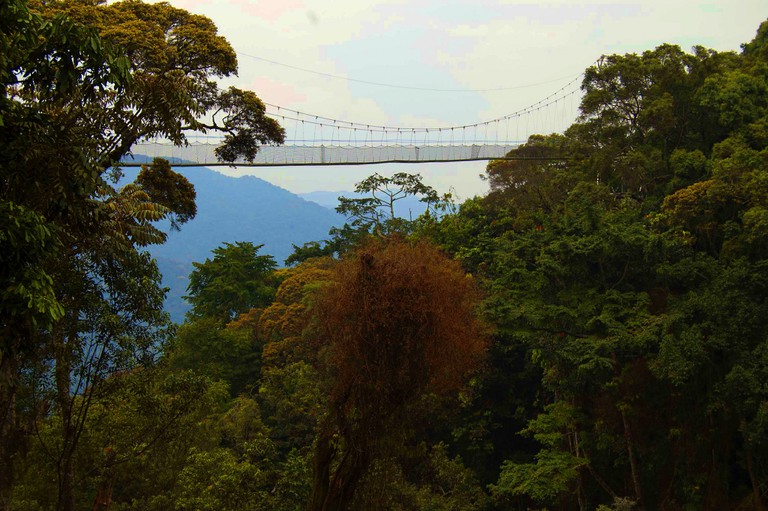 The canopy walk over the rainforest is one of the park's highlights