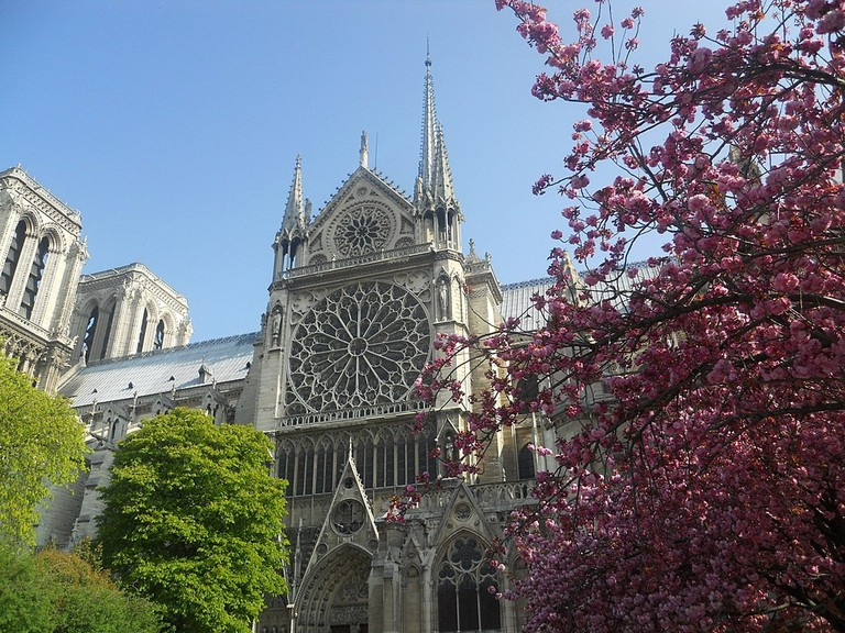 1024px-Notre_Dame_Cathedral_Cherry_Blossoms_(5987322718)
