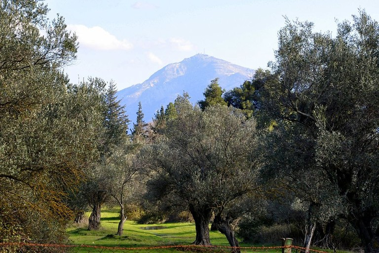 View of Penteli Mountain from Tatoi.