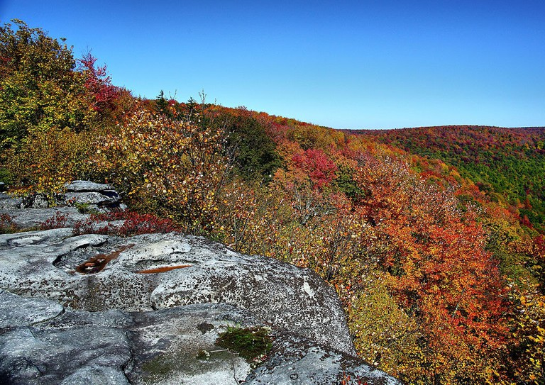 1024px-Table-rock-wv-autumn-trees_-_Virginia_-_ForestWander