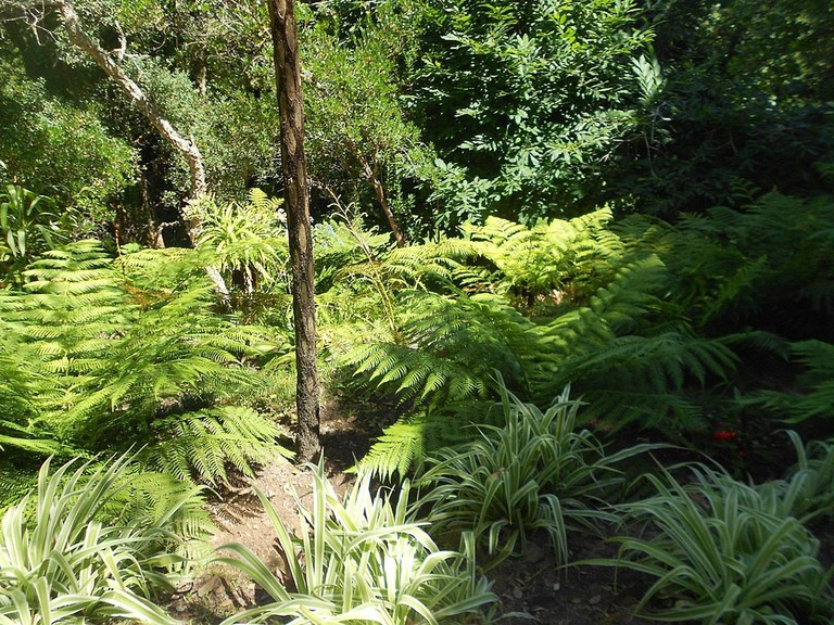 1024px-Valey_of_the_Ferns_in_the_gardens_of_Palácio_de_Monserrate,_Sintra,_Portugal_01
