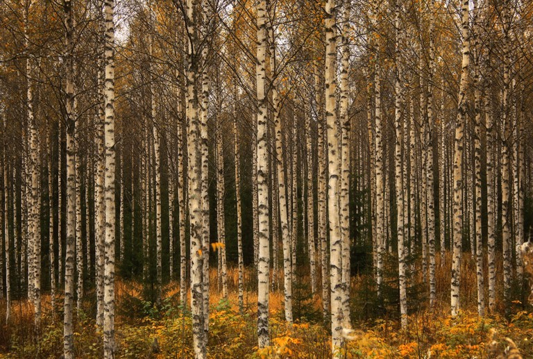 Autumn colours in Finland
