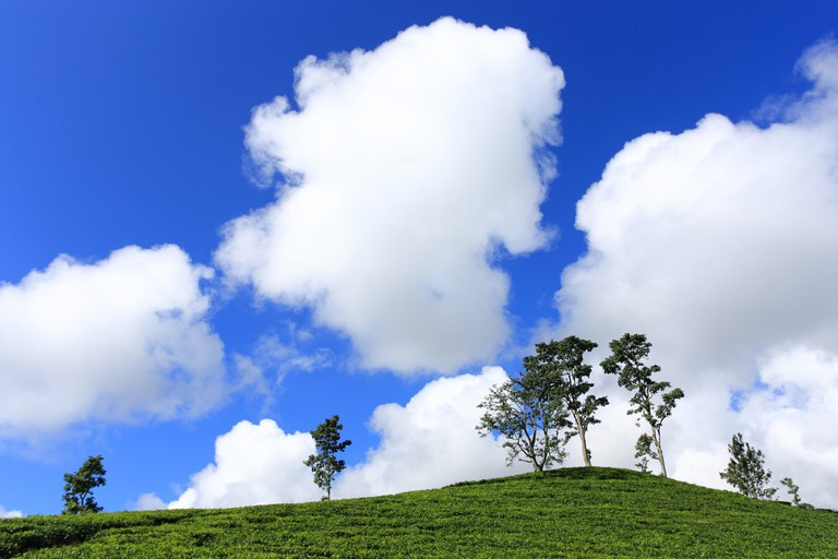 Bandung's vast tea plantation