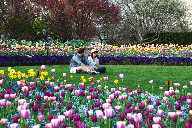 A couple sitting amid half a million tulip blooms at the Dallas Arboretum and Botanical Gardens