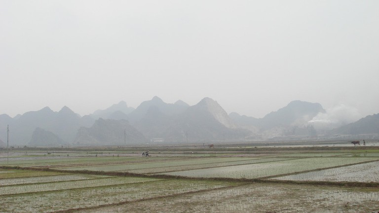 Rice_Paddies_Nam-Dinh_Vietnam