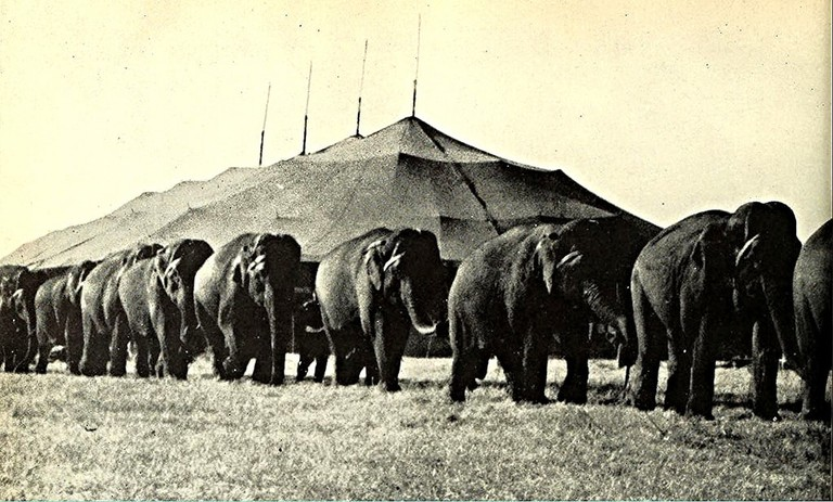 Ringling Brothers Circus in Madison, WI in 1950