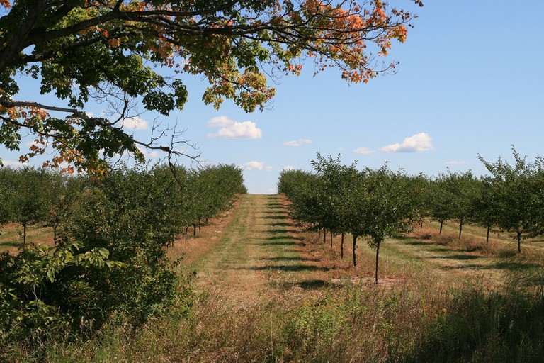 A cherry orchard near Elk Lake in the Grand Traverse region | © Bernt Rostad/Flickr