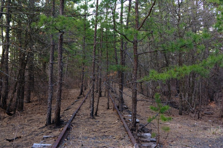 The dense, occasionally creepy, South Jersey Pine Barrens