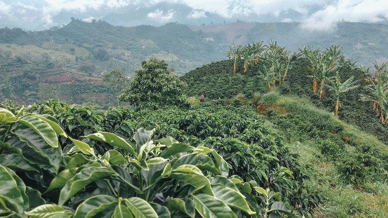 The mountainous terrain of the Colombian Coffee Region