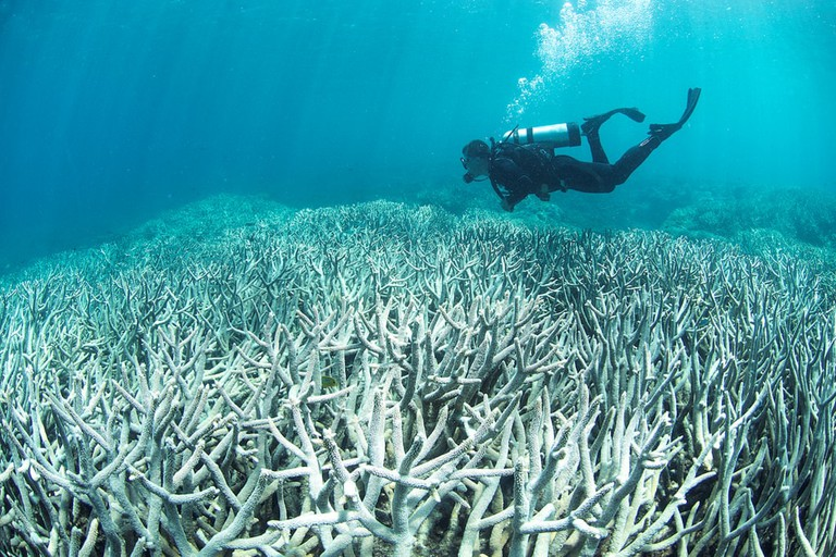 Coral bleaching around Heron Island