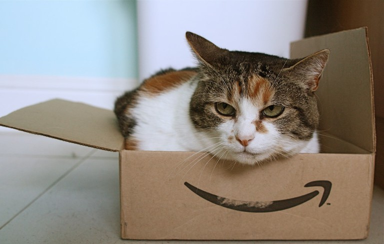 A cat sitting in a delivery box.