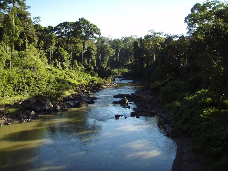 Trek the jungles and explore the river in Danum Valley