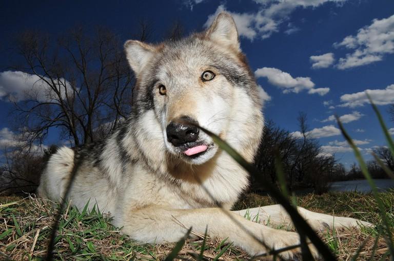 Wolf Park | Serge Melki/Flickr