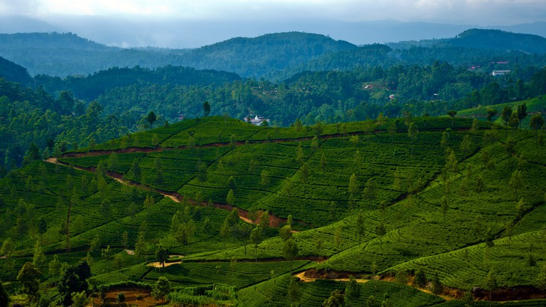 The British gave Sri Lanka thousands of hectares of tea plantations