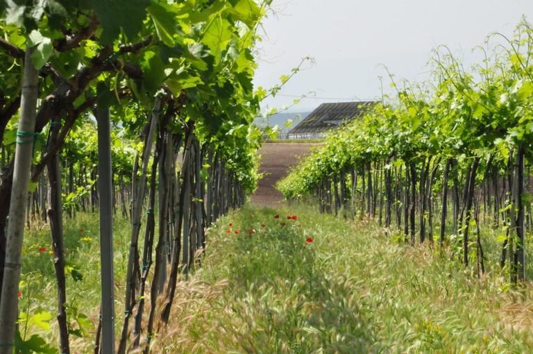 Ligas Winery