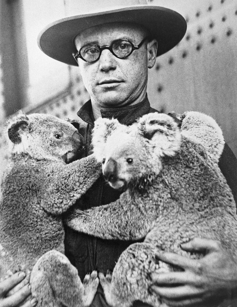 The San Diego Zoo's first koalas.