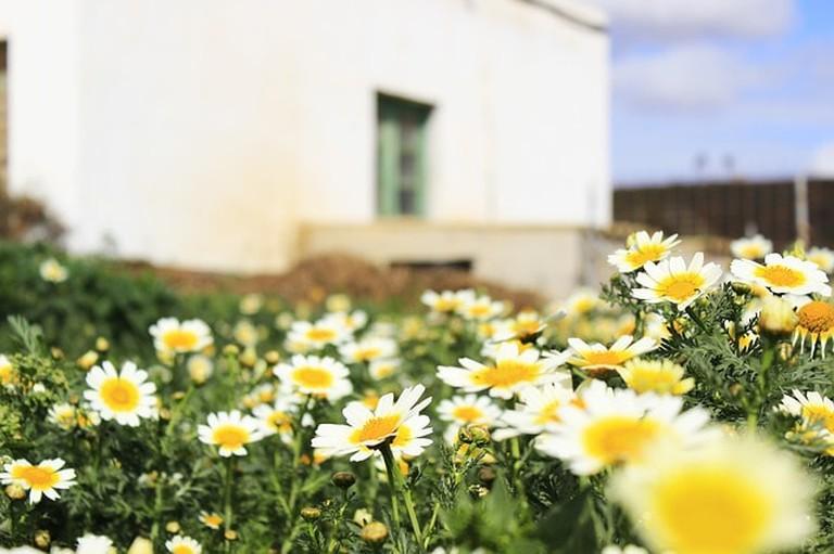 daisies-725923_640