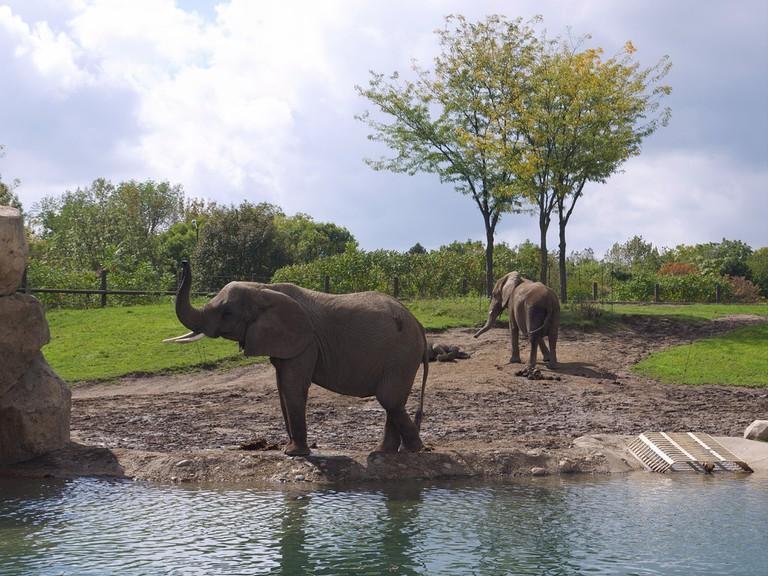 Indy Zoo | Davitydave/Flickr