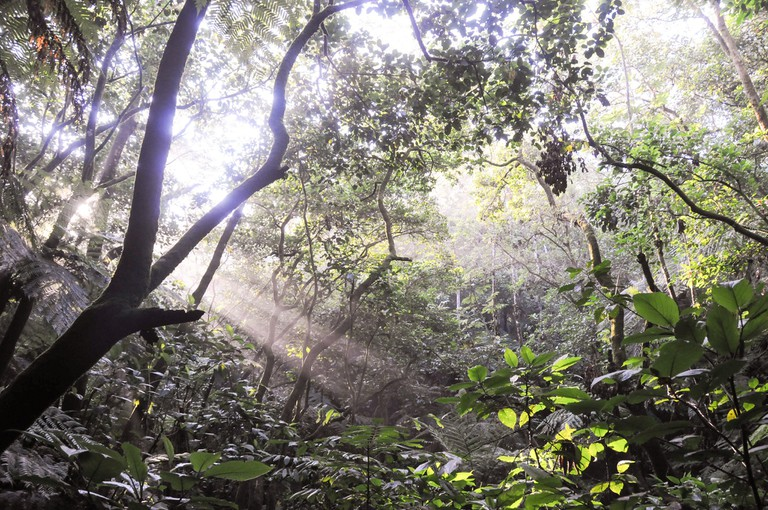mexican cloud forests