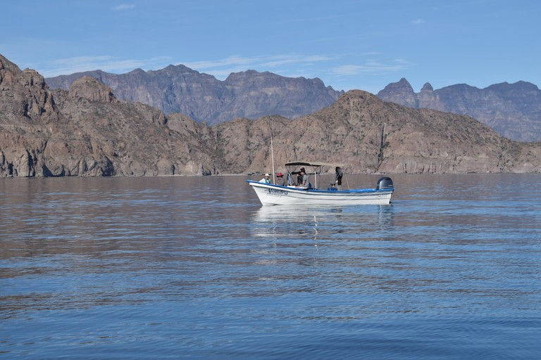 A panga in search of blue whales in Loreto's National Park