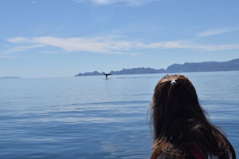 Spotting the largest mammal on earth in Loreto, Baja Sur
