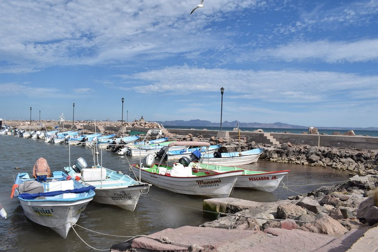 Come to Loreto's fishing port early in the morning for the best whale watching deals