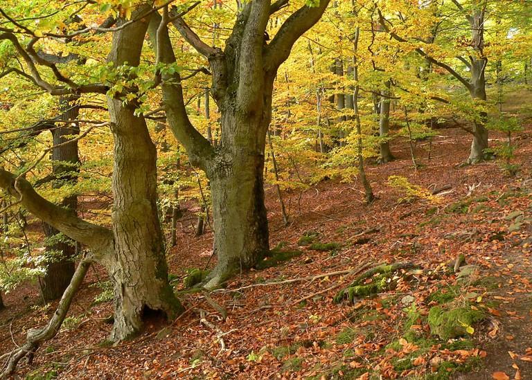 Beech forest in Kellerwald-Edersee National Park