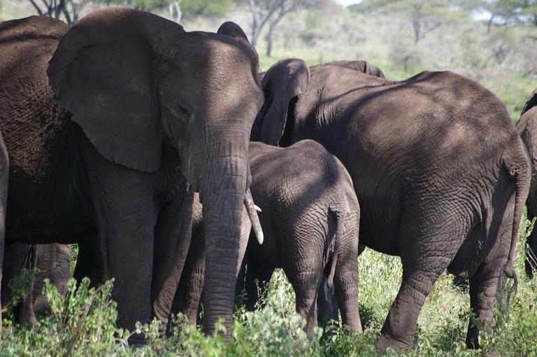 Elephants-activesteve-flickr-1024px