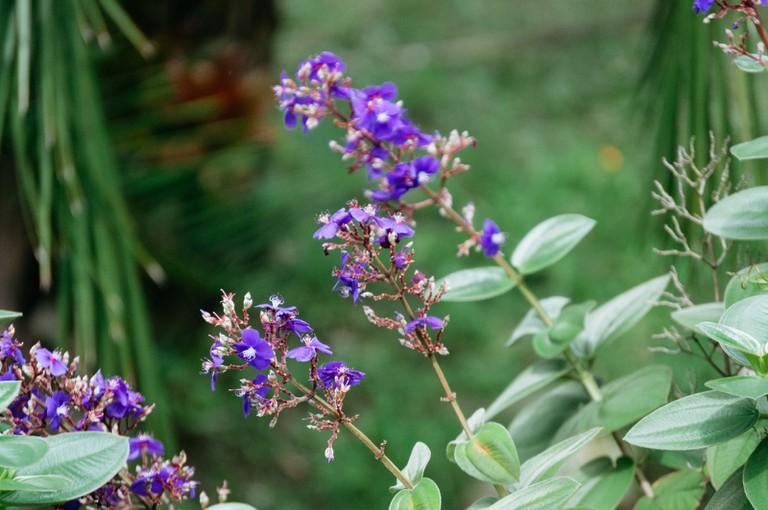 Kibuye's brightly colored flora