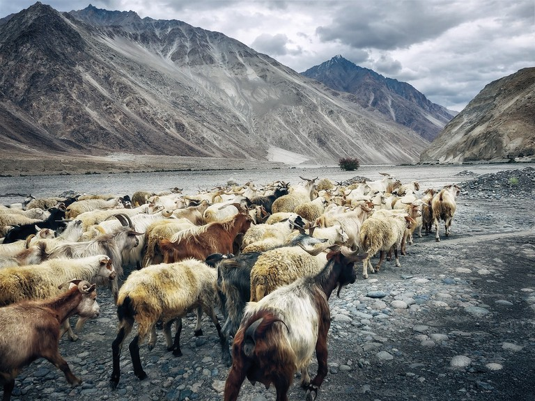 Originally a remote village, Ladakh has seen an upswing in tourism in recent years