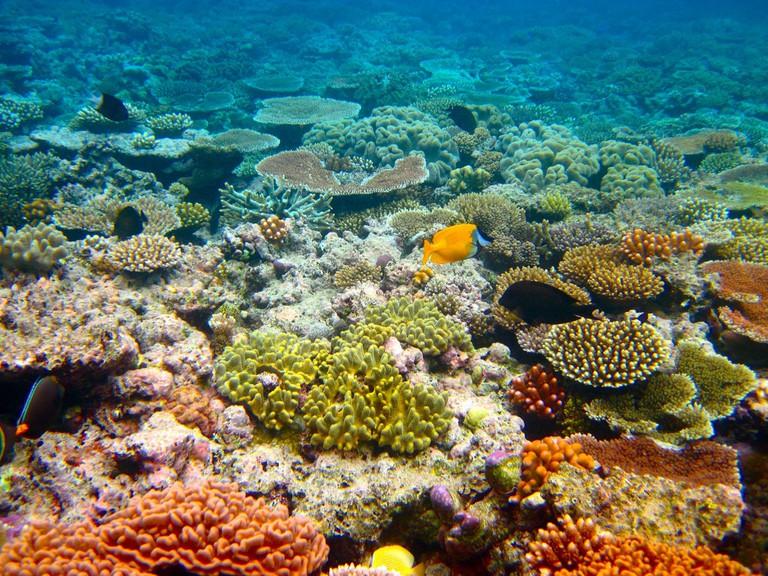 Great Barrier Reef © Kyle Taylor/Flickr