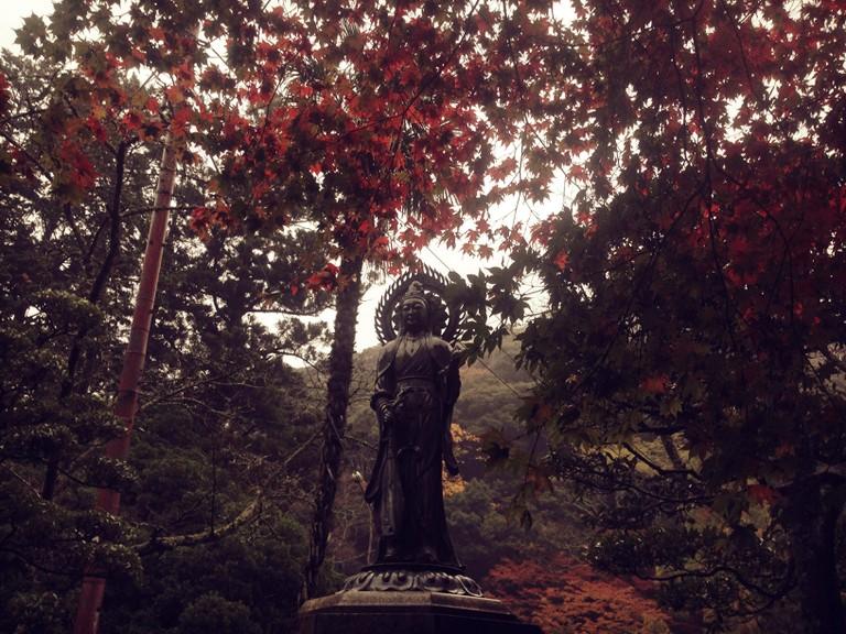 momiji_maple_leaves_autumn_fall_minoo_park