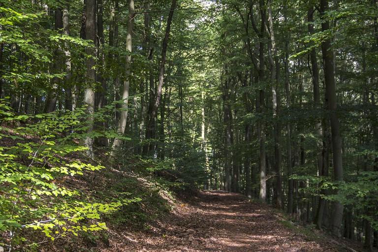 Kellerwald-Edersee Forest