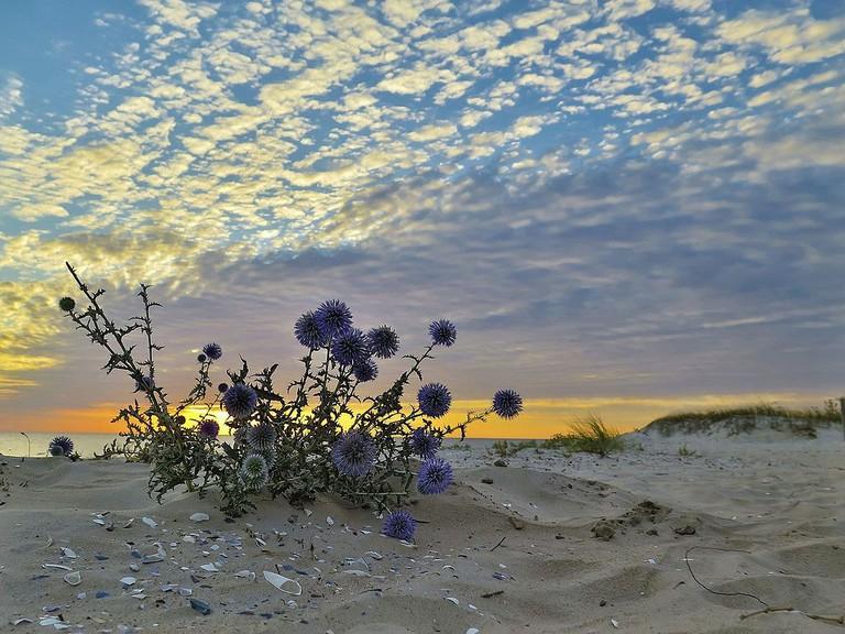 Kinburn sands