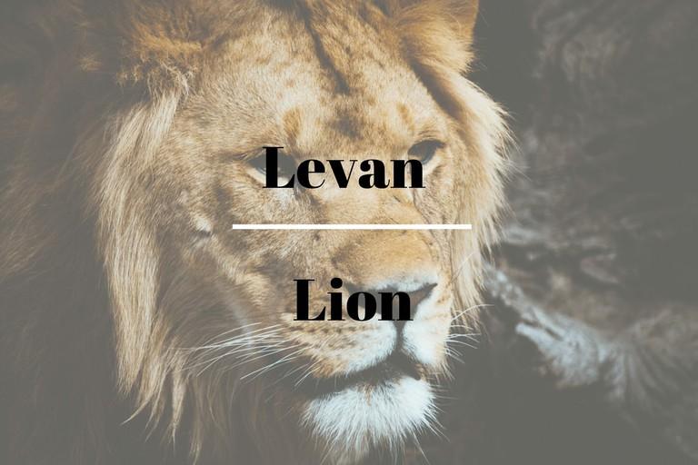 levan 3