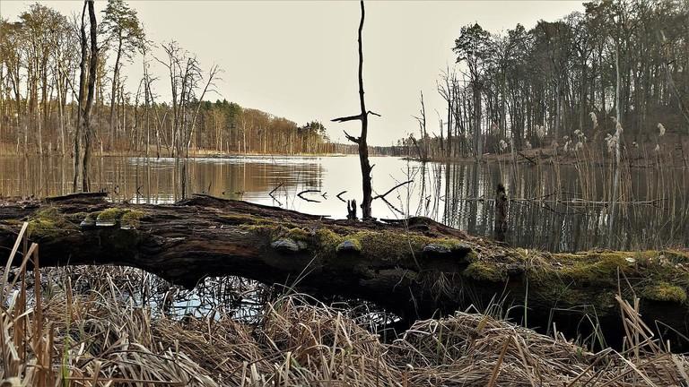 Müritz-Nationalpark,_Teilgebiet_Serrahn,_Nordufer_Schweingartensee
