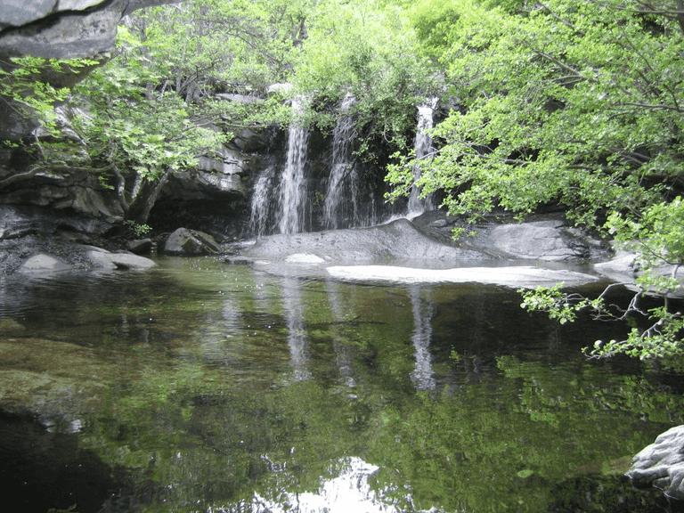 Pithara