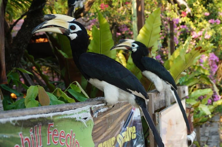 One of the many Hornbill species found in Malaysia   © Sam Bedford