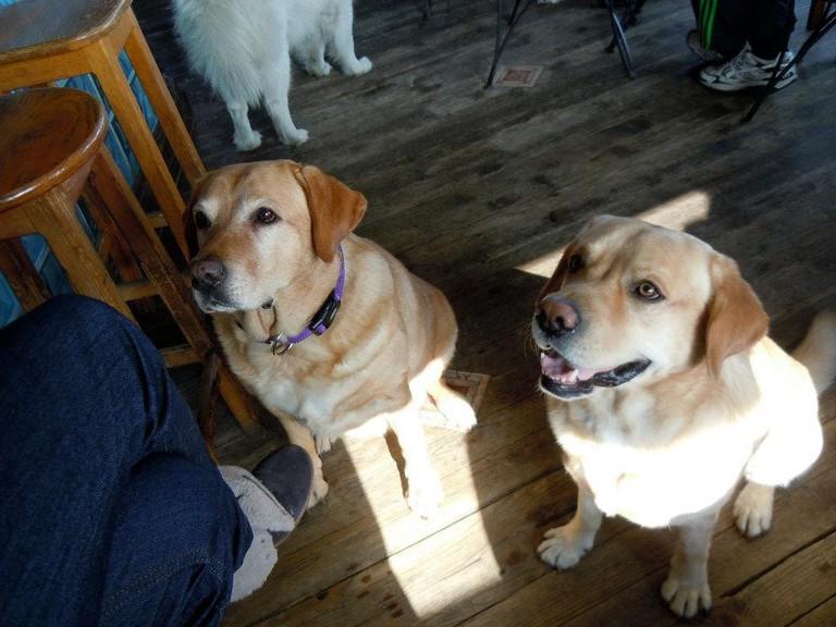 Expect plenty of canine companionship at Savana