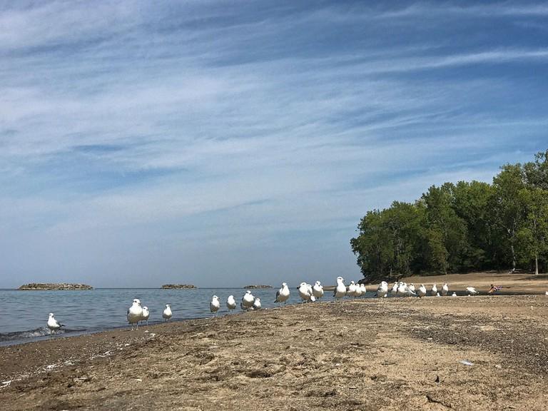 seagulls-beach-erie