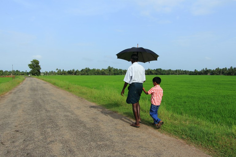One of the best views of Kerala's countryside can be best seen in Kuttanad region