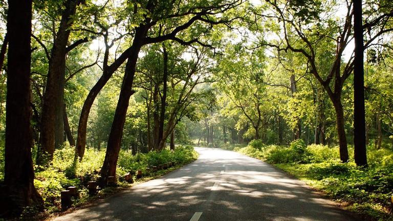 Beautiful road in the jungle | © Pol Miret/Shutterstock